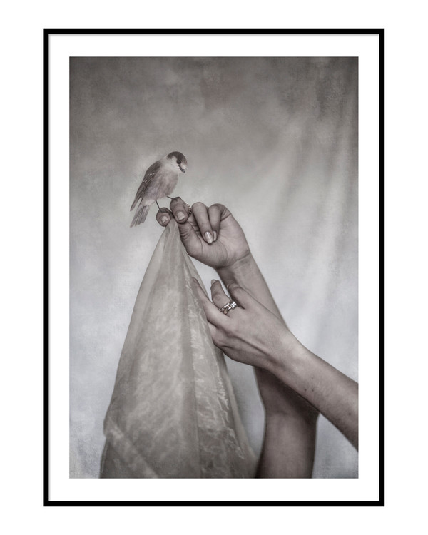 A birds and 2 hands Poster